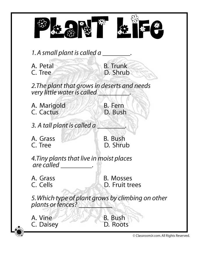 Plant Life for Kids Plant Life Worksheet