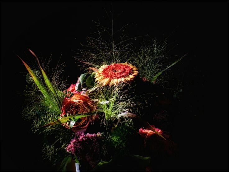 53 best images about Blumen on Pinterest  Nature