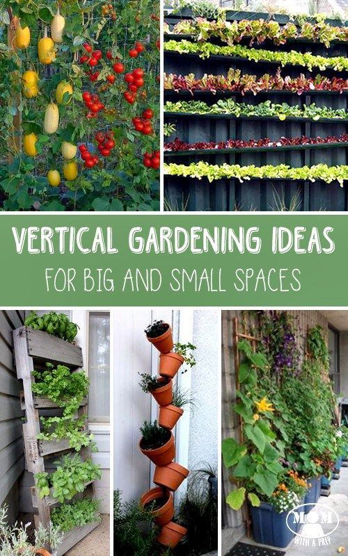 25 Best Ideas About Container Vegetable Gardening On Pinterest