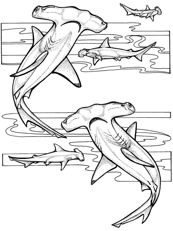 Animals 77 Advanced Coloring Pages