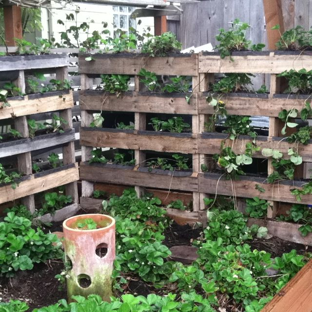 Reclaiming Pallets To Make Vertical Strawberry Bed