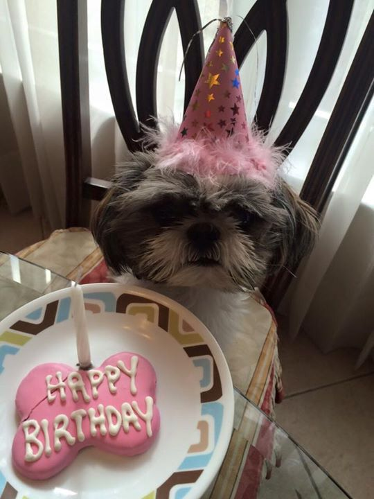 25 Best Ideas About Happy Birthday Puppy On Pinterest