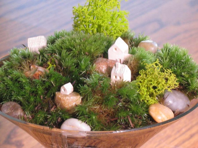 16 Best Images About Dish Garden Ideas On Pinterest Gardens