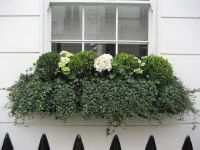 17 Best images about Window boxes on Pinterest | Shade ...
