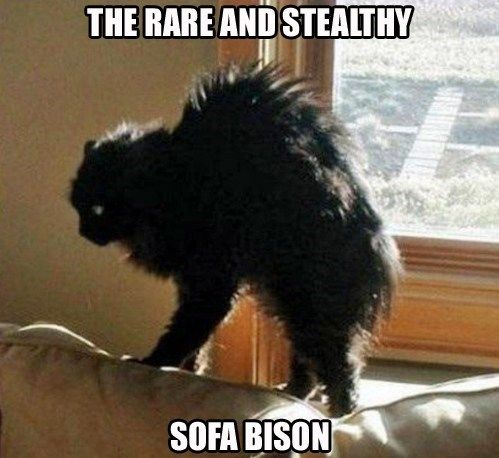 sofa bison cat pottery barn turner reviews 434 best images about cartoons, cat-toons, & funny ...