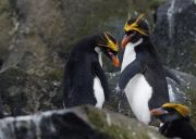 1000 ideas macaroni penguin