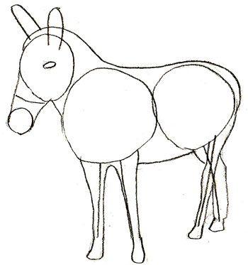 2005 best Donkeys images on Pinterest