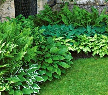 Love these ferns and hostas