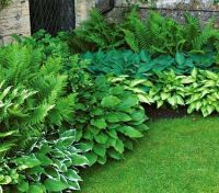 Starter Shade Collection | Ferns, Landscaping Blocks and ...
