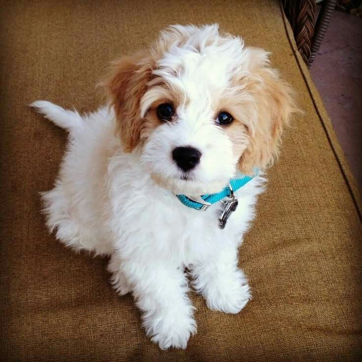 1000 Images About Cute On Pinterest Too Cute Puppys