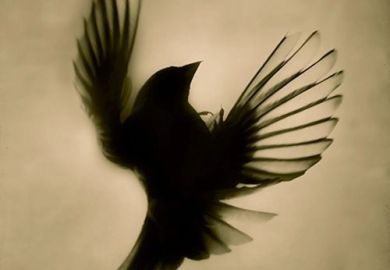 Tattoo Sparrow Designs