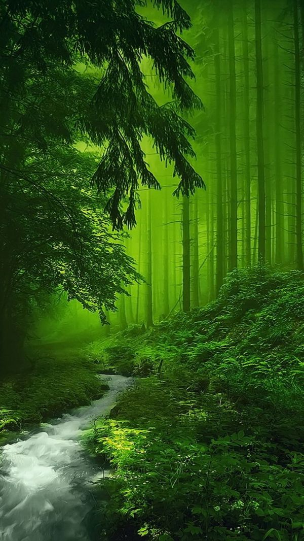 1000 ideas about Forest Wallpaper on Pinterest Wall