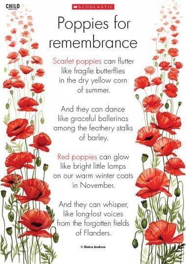 Poppies  Remembrance Day Ideas  Pinterest  Poppies