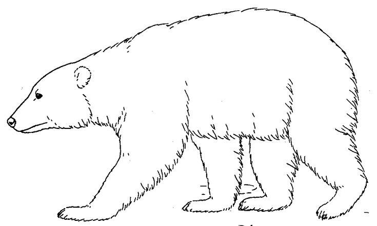 17+ best ideas about Polar Bear Adaptations on Pinterest
