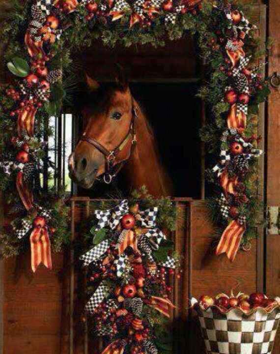 Pick Cute Deck The Stalls Horse Of The Day Stables