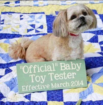 Custom pregnancy announcement sign.  Toy tester, guard dog, big brother/sister,