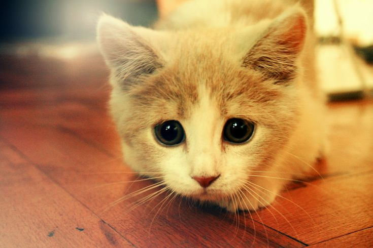78 Best Images About CUTE ANIMALS!! On Pinterest