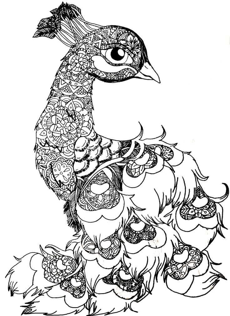 B&W Peacala, peacock,animal,bird,drawing,blackandwhite