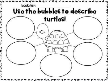 187 best images about Turtle Theme Classroom on Pinterest