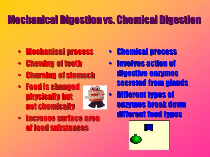 Dog Mouth Diagram Mechanical Vs Chemical Digestion Chapter 25 Pinterest