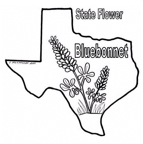 83 best SS ~ Texas images on Pinterest
