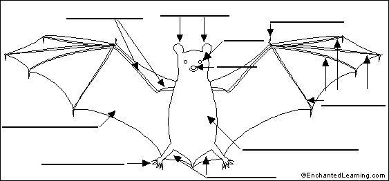 1000+ images about Unit Studies: Bats on Pinterest