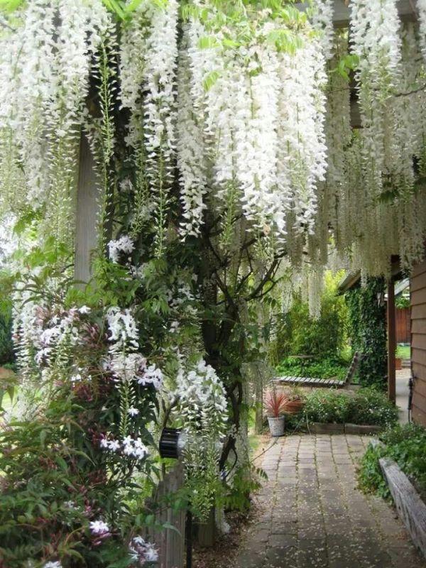 2315 garden