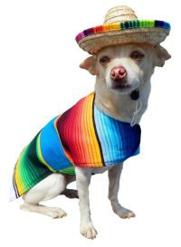 1000+ ideas about Mexican Costume on Pinterest