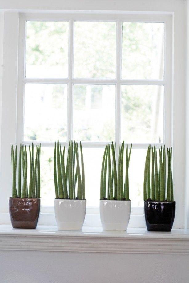 Planten in de vensterbank tegen inkijk Wanneer je iets