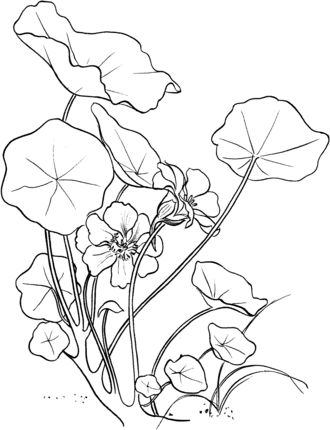 1038 best images about Drawing Flowers / Tutorials