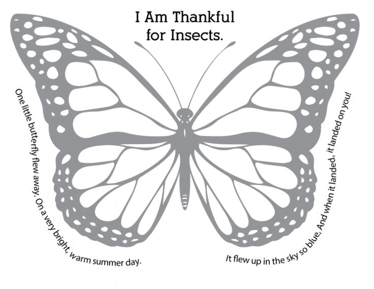 I am thankful for birds and insects. Sunbeams Lesson 13: I