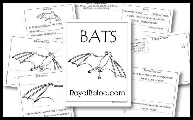 386 best images about Stellaluna/bats on Pinterest