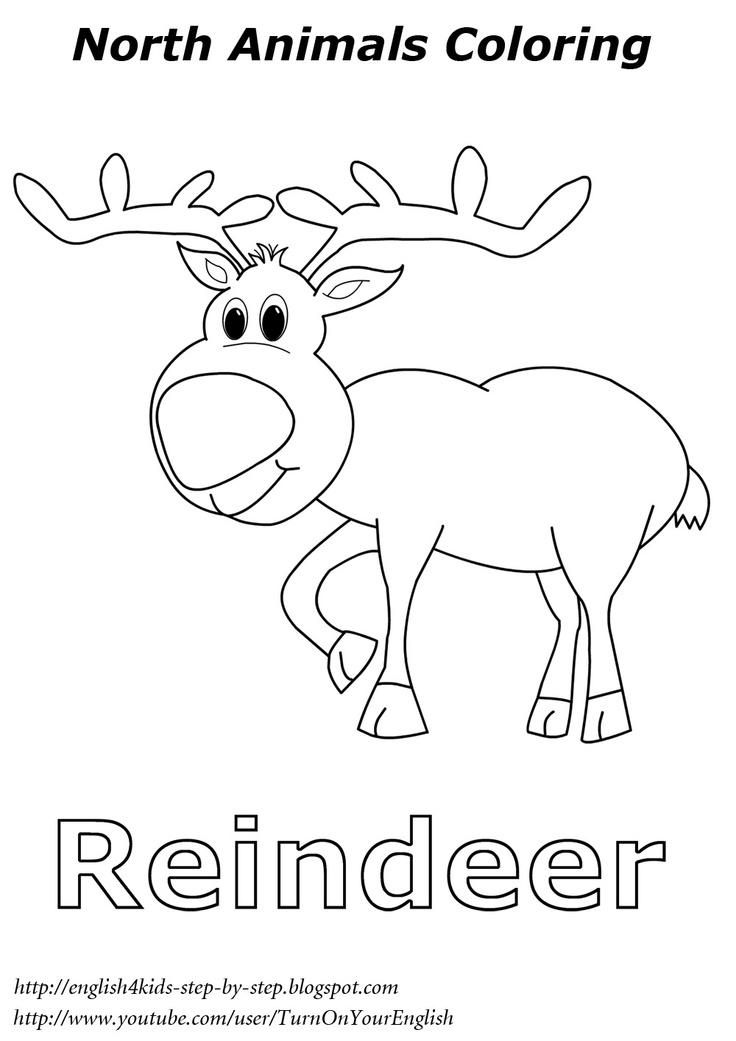 reindeer Christmas coloring # North animal coloring # esl