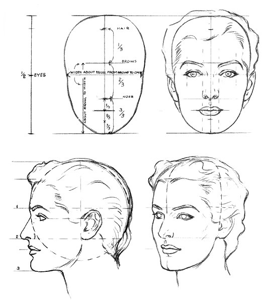 proportions of the head, anatomy / пропорции головы
