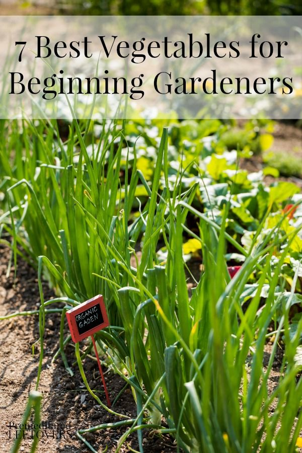 218 Best Images About Vegetable Garden Ideas On Pinterest
