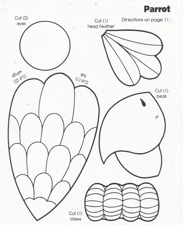 25+ best ideas about Parrot Craft on Pinterest