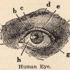Eye Anatomy Vintage Diagram Dual Motor Starter Wiring 13 Best Images About Diagrams On Pinterest | Eyes, Human And Red Eyes