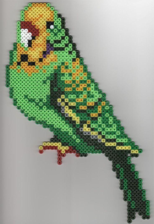 kitchen remodeling orlando white towels periquito | pájaros y aves(pinterest e internet ...