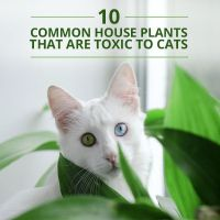 10 Common House Plants That Are Toxic to Cats | Cats ...
