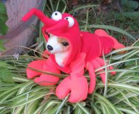 1000+ ideas about Lobster Costume on Pinterest   Crab ...