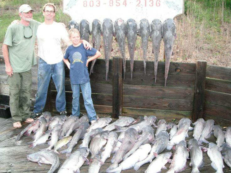 300 hook trotline 20 hours in the water 48 catfish over