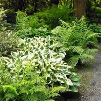 25+ best ideas about Hosta Gardens on Pinterest   Hosta ...