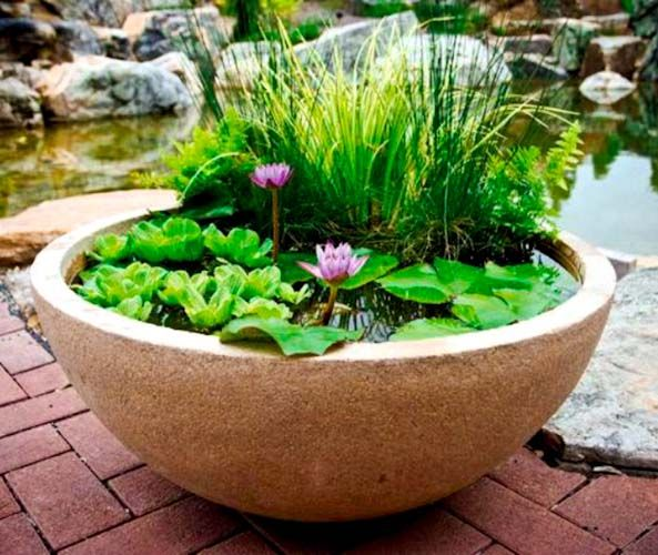 25 Best Ideas About Container Water Gardens On Pinterest Diy