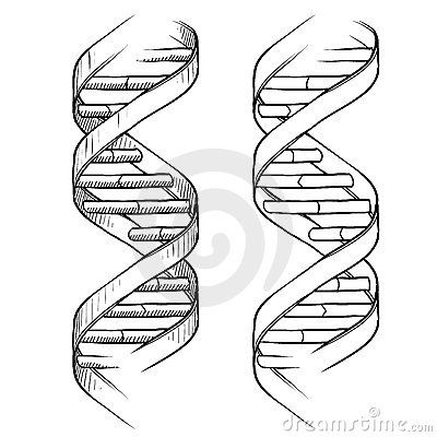 DNA Double helix drawing by Lhfgraphics, via Dreamstime