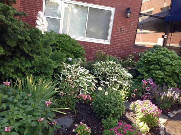 school garden hydrangea hostas