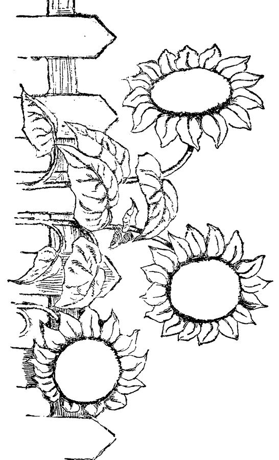 529 best images about Flower printables on Pinterest