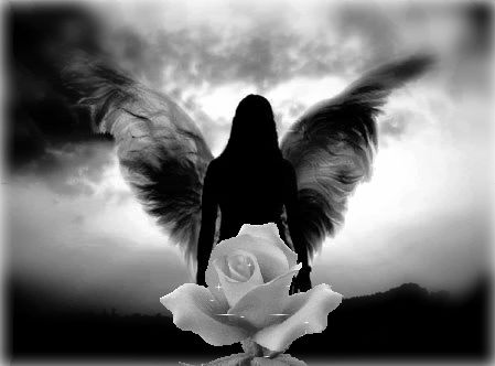 Falling Feathers Wallpaper Black And White Angels Pictures Bing Images Angelic