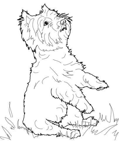 West Highland White Terrier Coloring page from Dogs