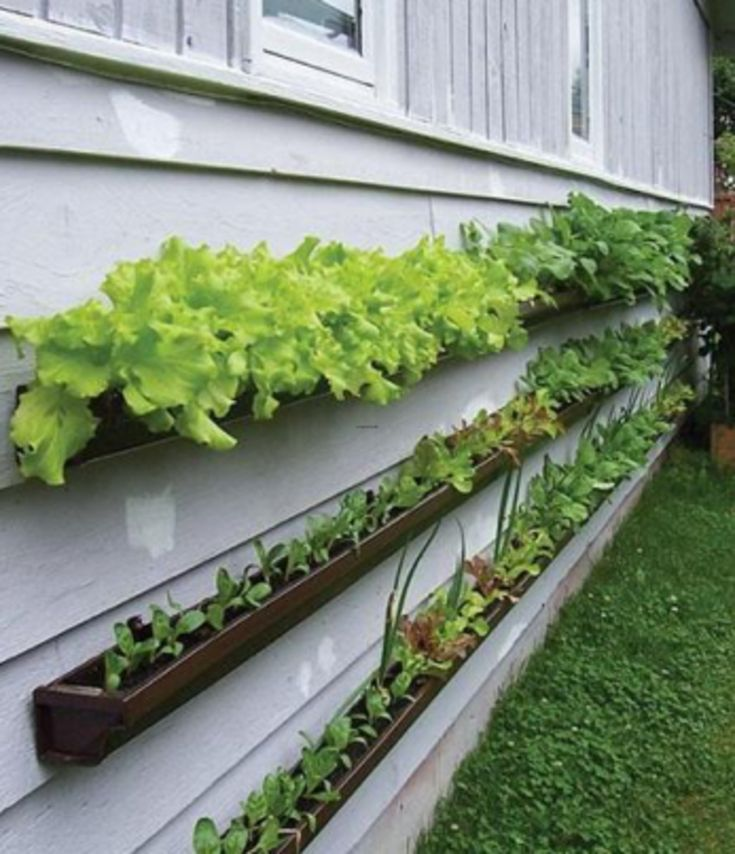 86 Best Images About Vegetable Garden Ideas On Pinterest Gardens