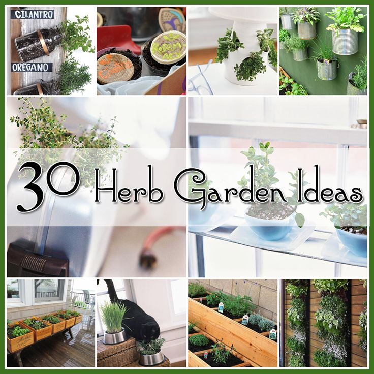 2056 Best Images About Gardens Indoor& Herbs Succulent Plants On